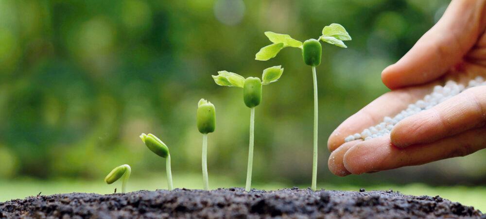 главное отличение органических удобрений