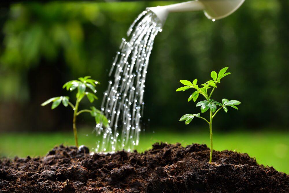 Качество воды для растений