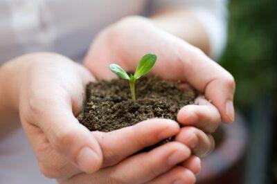 органические или минеральные удобрения