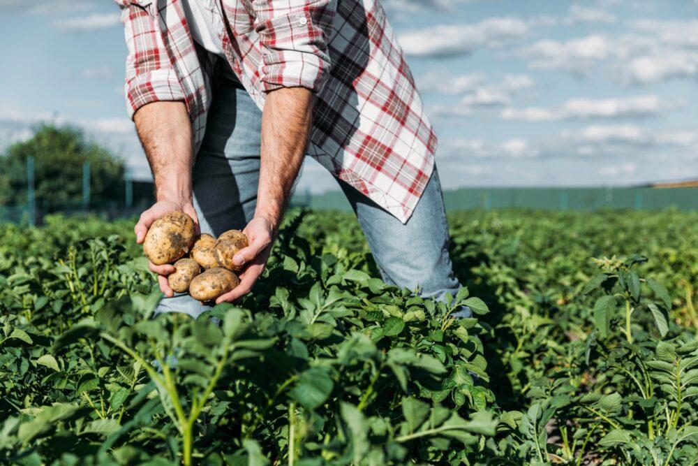 какие жидкие удобрения подходят для картофеля