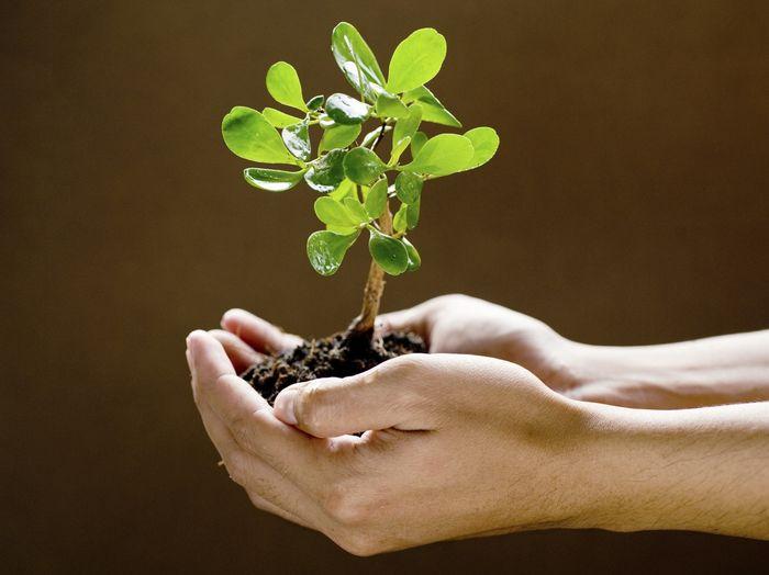 Калийные удобрения необходимы для обеспечения питания растениям. Также они способствуют увеличению урожайности, улучшают фотосинтез, дыхание растений.