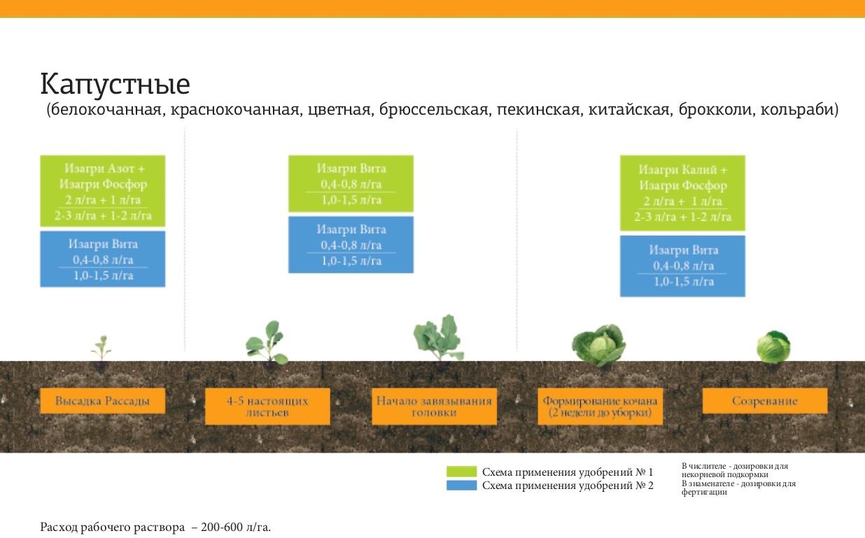 Программа питания для капустных