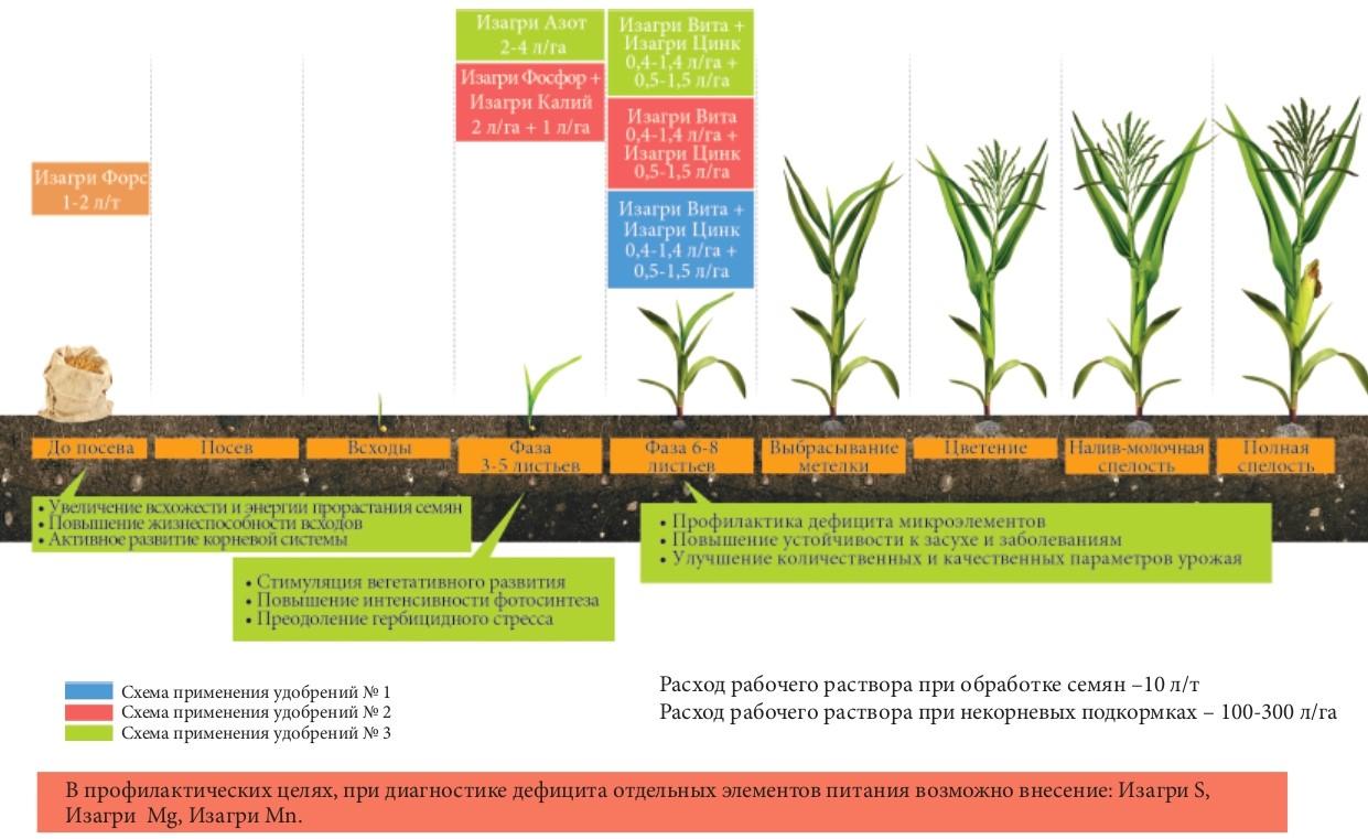 Программа питания для кукурузы