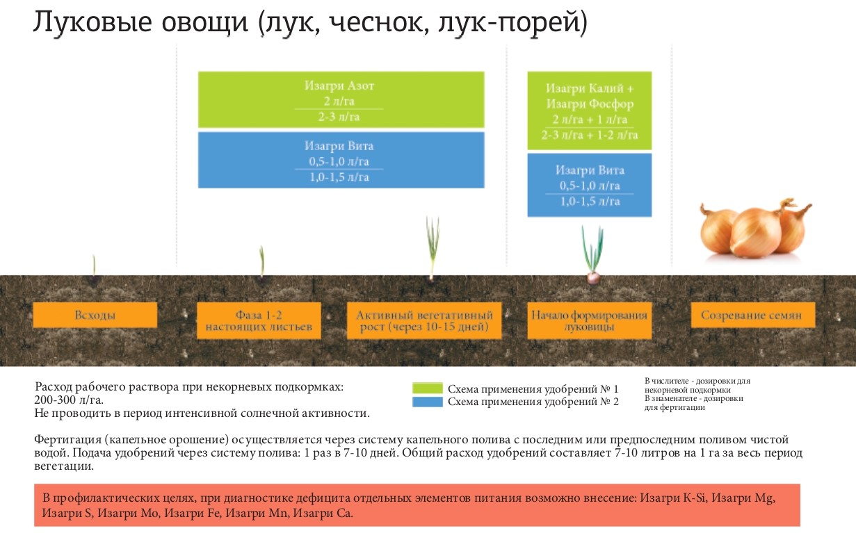 Программа питания для луковых овощей