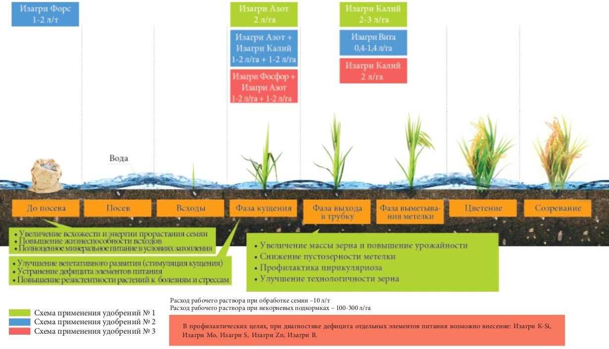 Программа питания для риса