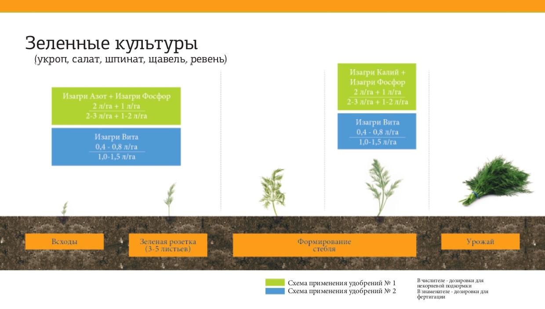 Программа питания для зеленых культур