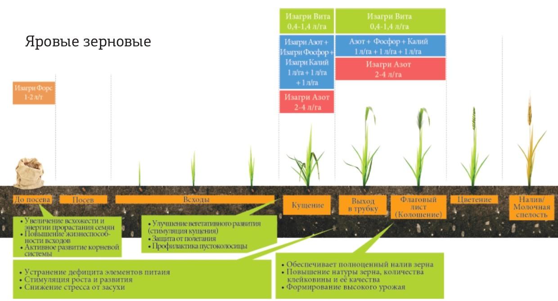 Программа питания для яровых зерновых