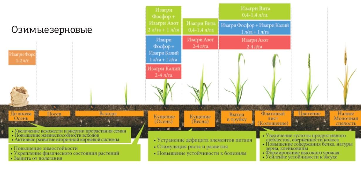Программа питания для озимых зерновых